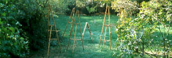 easels in the garden